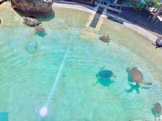 水のプールで泳いでいる人の写真・画像素材[1227078]