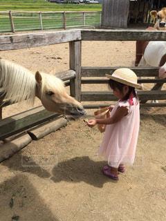 馬に餌をあげてる女の子 - No.1007666