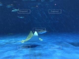 水族館の写真・画像素材[1007760]