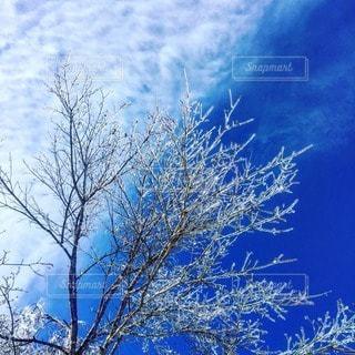 冬の写真・画像素材[33279]