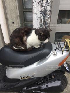 バイクの上に座ってる黒い猫の写真・画像素材[1020004]