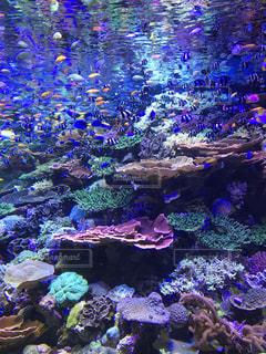 美しい珊瑚の写真・画像素材[1008368]