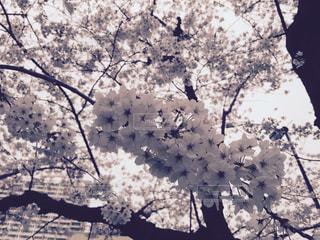 木の花の花瓶の写真・画像素材[1131666]