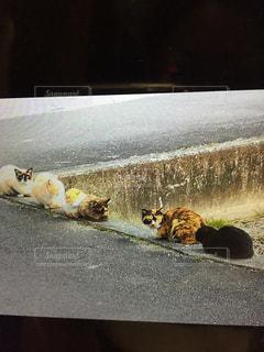 並んでる猫の写真・画像素材[1017292]