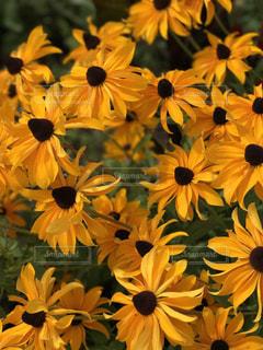 花の写真・画像素材[1008679]