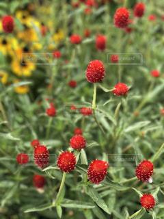 花の写真・画像素材[1008683]