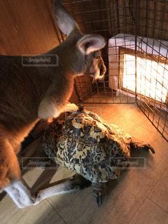 暖をとるワラビーと亀の写真・画像素材[1008691]