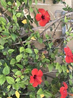 花の写真・画像素材[1009010]
