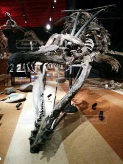 恐竜の化石の写真・画像素材[1009106]