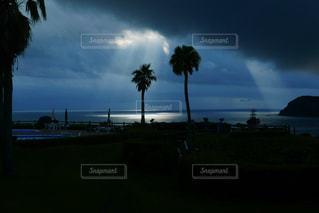 暗い空の椰子の木の写真・画像素材[1009257]