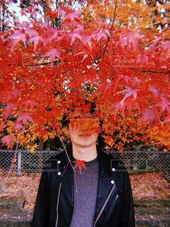紅葉で隠れる男性 - No.1009321
