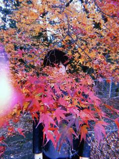 木の花の花瓶 - No.1010797