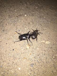 未舗装の道路に立っている昆虫 - No.1010836