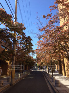 並木通りの都市の景色 - No.1010842