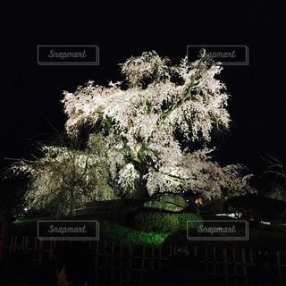 塀の前に木 - No.1010881