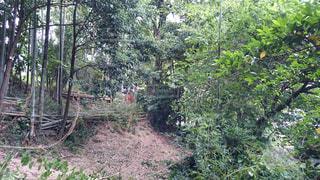 竹の伐採作業の写真・画像素材[1009392]