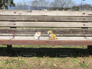 木製の公園のベンチの写真・画像素材[1047819]