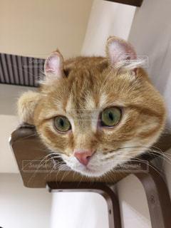 ボックスに座って猫 - No.1009672