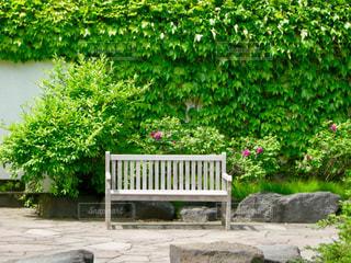 緑に囲まれたベンチの写真・画像素材[1012520]