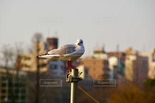 都会鳥の写真・画像素材[1013264]