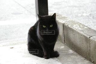 黒猫の写真・画像素材[1013265]