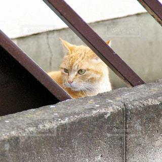 野良猫の写真・画像素材[1013268]