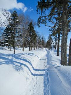 雪道の写真・画像素材[1014739]