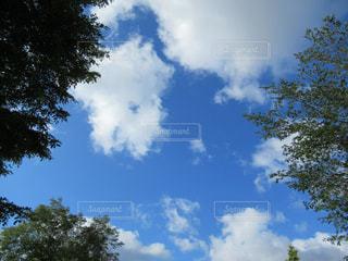 青い空と木の写真・画像素材[1017153]