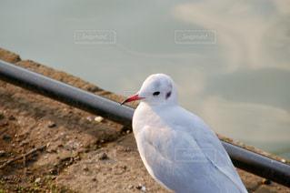 鳥の写真・画像素材[1017588]