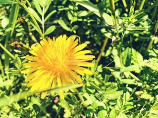 緑の葉と黄色の花 - No.1010326