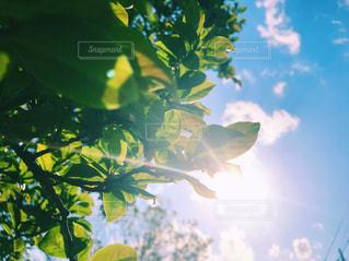 近くの木のアップ - No.1010327