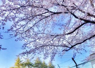 近くの木のアップ - No.1010348