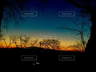 背景の夕日とツリー - No.1010737