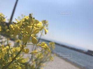 黄色の花 - No.1010749