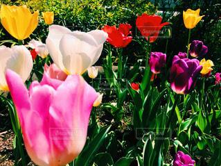 近くの花のアップ - No.1010750