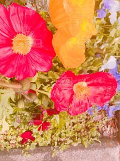 近くの花のアップ - No.1010752