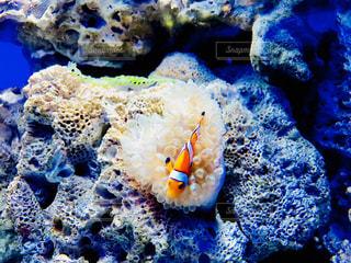 サンゴの水中ビュー - No.1014234