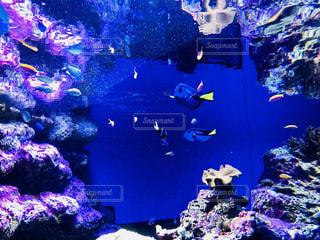 サンゴの水中ビュー - No.1014235