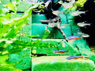 カラフルな魚 - No.1014522