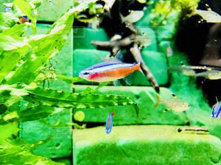 水の中を泳ぐ小魚 - No.1014523