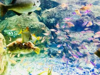 カラフルな魚 - No.1014552