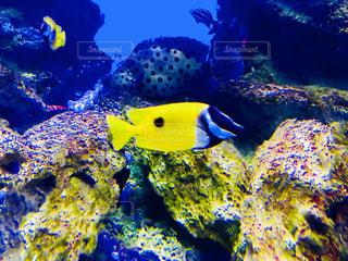 黄色い魚 - No.1015018