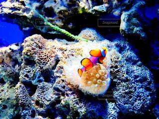 サンゴの水中ビュー - No.1015122