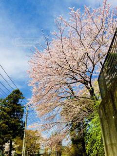 近くの木のアップの写真・画像素材[1015877]