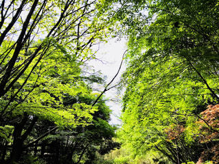 森の大きな木 - No.1116758