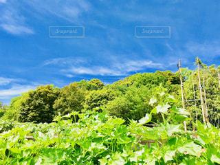 夏の風景の写真・画像素材[1147407]