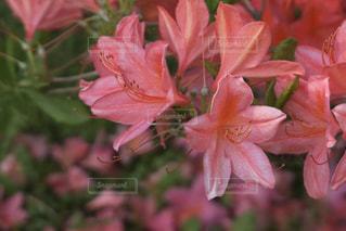 弘前の植物園の写真・画像素材[1010089]