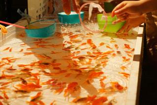 金魚すくいの写真・画像素材[1010092]