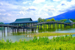 夏の鶴の舞橋の写真・画像素材[1010104]