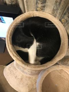 猫爆睡の写真・画像素材[1012511]